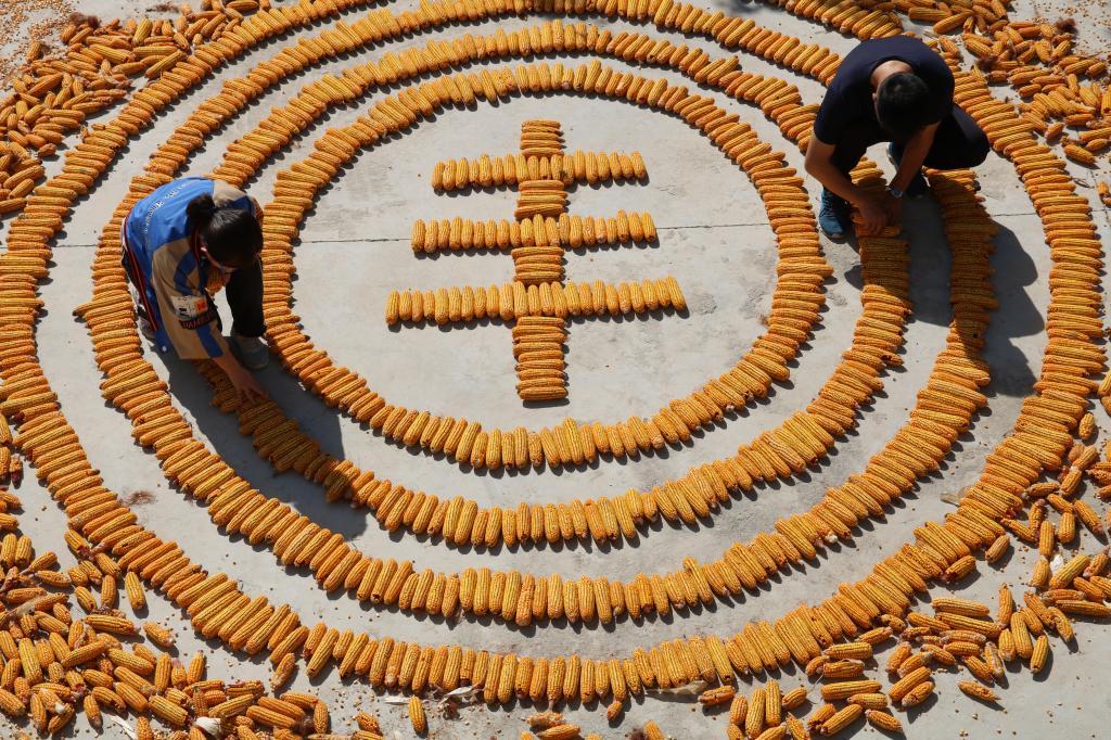 博州农民趣味庆丰收