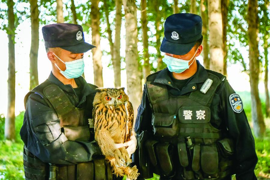 救助野生动物
